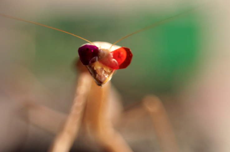 mantis-modelling-miniature-3d-glasses-credit-newcastle-university-uk.jpg